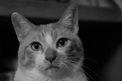 猫の気持_a0333195_20500377.jpg