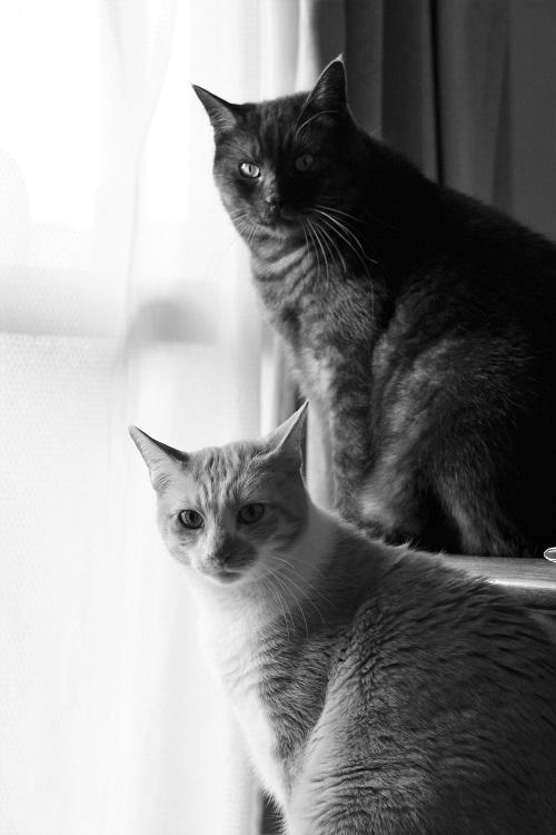 猫の気持_a0333195_20580897.jpg