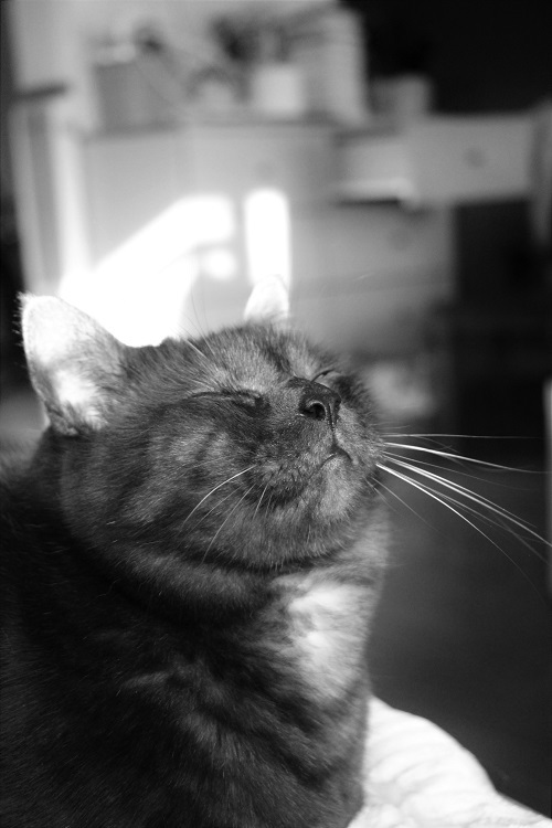 猫の気持_a0333195_20582926.jpg