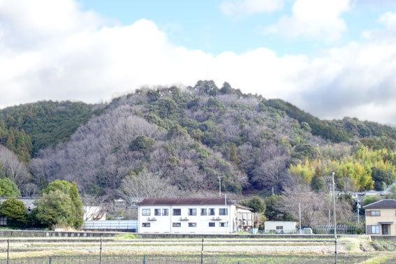 金比羅山も春の色_b0145296_13191994.jpg