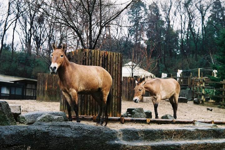3/2分 多摩動物公園① 5枚_b0016600_0371518.jpg