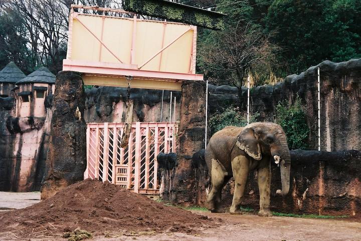3/2分 多摩動物公園① 5枚_b0016600_037473.jpg