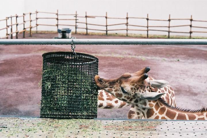 3/2分 多摩動物公園① 5枚_b0016600_037722.jpg