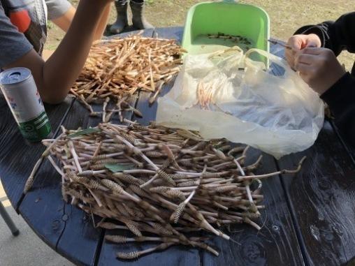 土筆採りの後は 村の子とバトミントンを楽しむ_a0346704_19255921.jpg