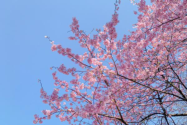 新宿御苑の桜!_b0194208_17402624.jpg