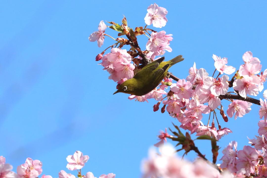 桜咲く里の風景 - 2019年・上越線 - _b0190710_22441799.jpg