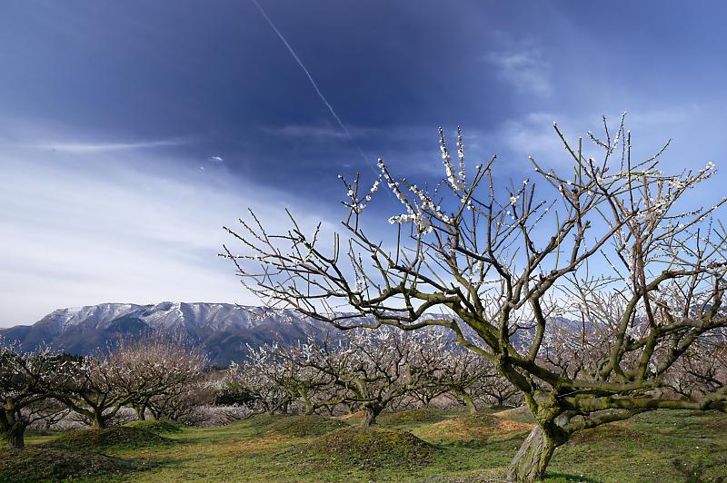 三重県いなべ市遠征・其の二 いなべ市農業公園 梅林公園_f0032011_20123126.jpg