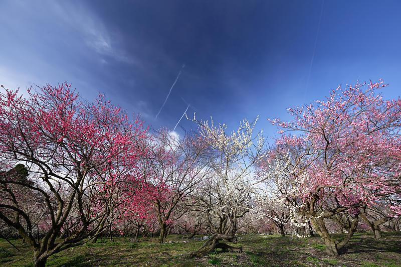 三重県いなべ市遠征・其の二 いなべ市農業公園 梅林公園_f0032011_20123284.jpg