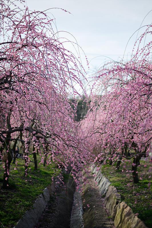 三重県いなべ市遠征・其の二 いなべ市農業公園 梅林公園_f0032011_20151625.jpg