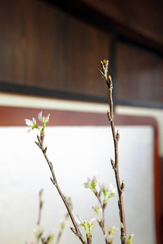 春が来た_e0239118_22005948.jpg