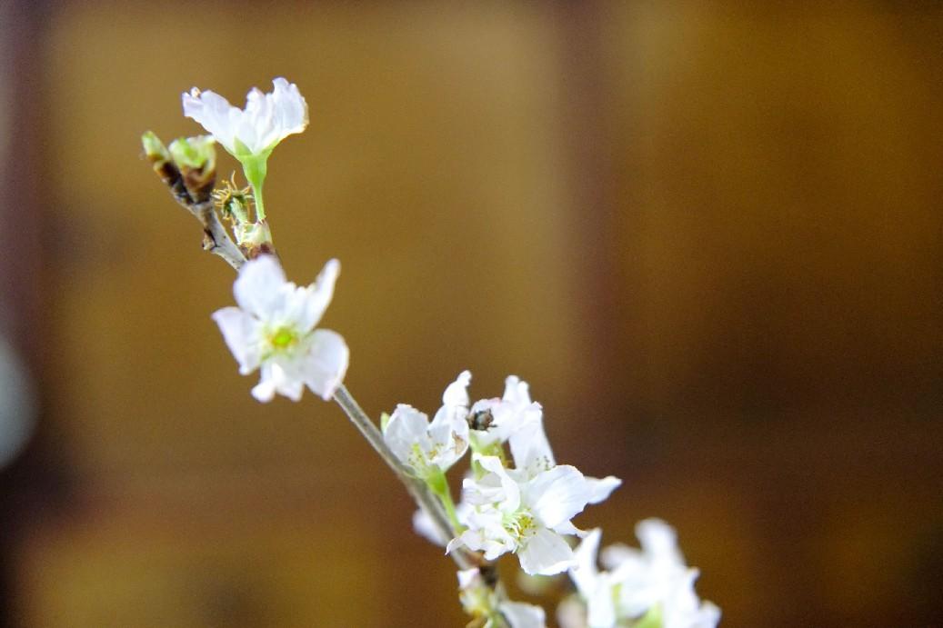 春が来た_e0239118_22005988.jpg
