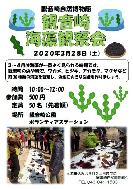 海藻観察会_a0386621_09540007.jpg