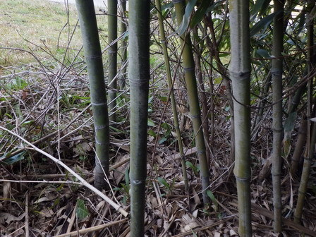 竹林の整備_a0123836_17342531.jpg