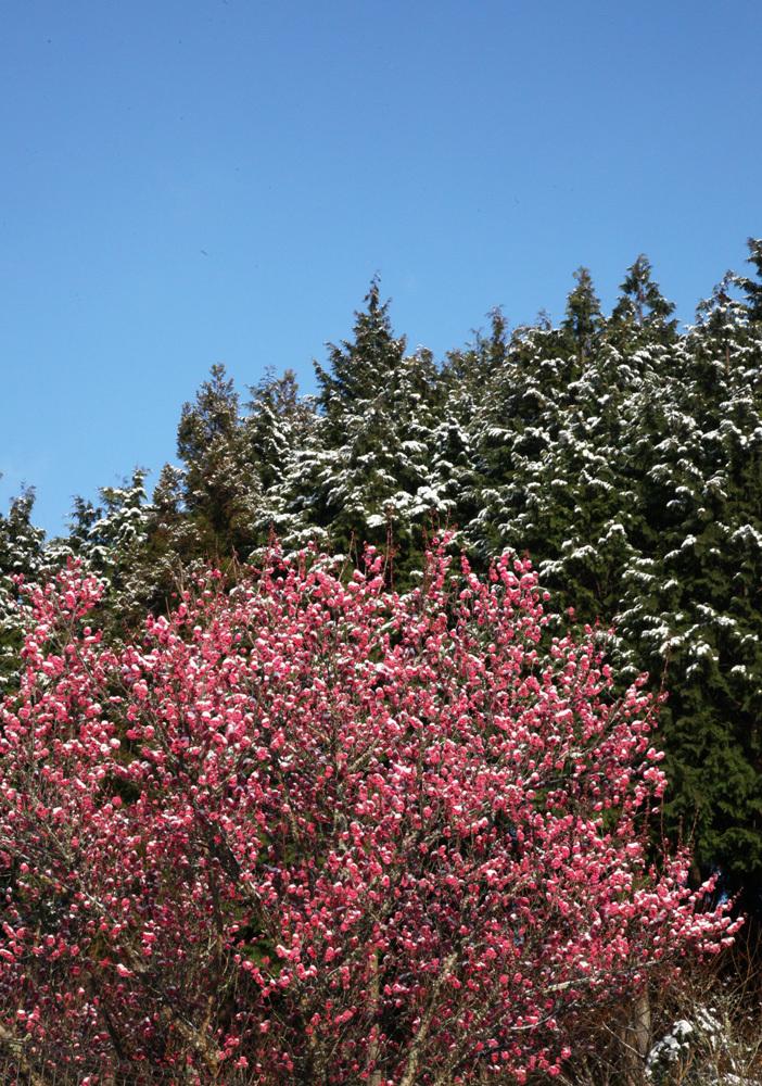 宇陀市 戒場(かいば) 雪景色 1_c0108146_21015014.jpg