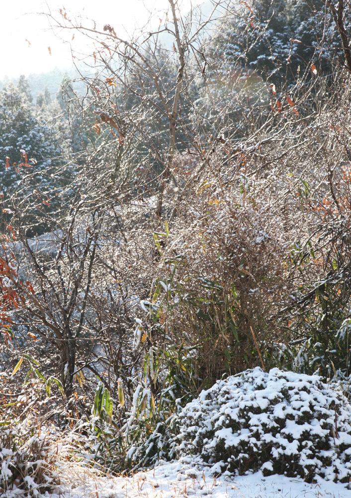 宇陀市 戒場(かいば) 雪景色 1_c0108146_21020685.jpg