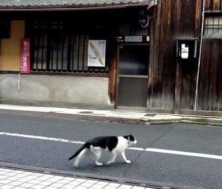 西陣まいづる新作猫名古屋帯とモデルさん・京都の河津桜。_f0181251_17541397.jpg
