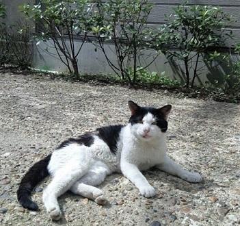 西陣まいづる新作猫名古屋帯とモデルさん・京都の河津桜。_f0181251_17565351.jpg