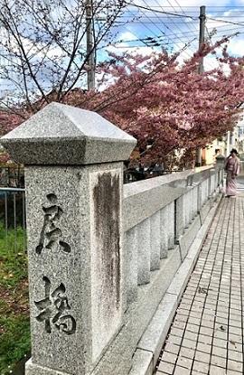 西陣まいづる新作猫名古屋帯とモデルさん・京都の河津桜。_f0181251_18063149.jpg