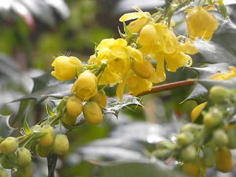 雨上がりの庭で_c0189155_00443575.jpg