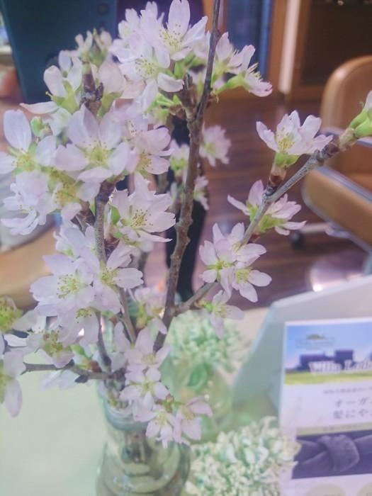 ちっちゃいけど桜が咲きました🌸_a0272765_16391275.jpg
