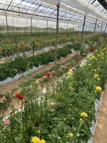 週末に沢山の花のご予約_b0137969_05263007.jpeg