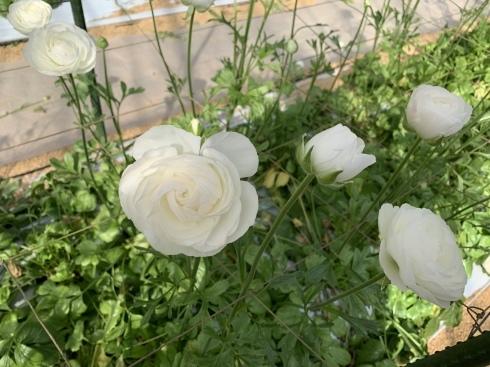 週末に沢山の花のご予約_b0137969_05272605.jpeg