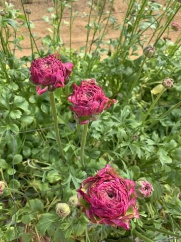週末に沢山の花のご予約_b0137969_05275089.jpeg