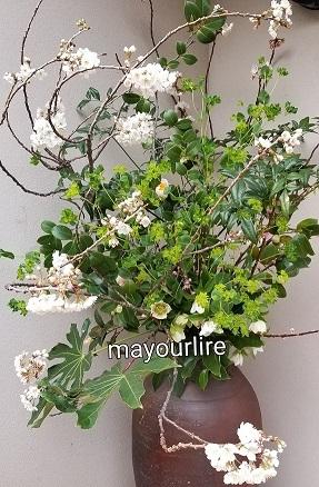 桜に元気をもらって_d0169179_18112519.jpg