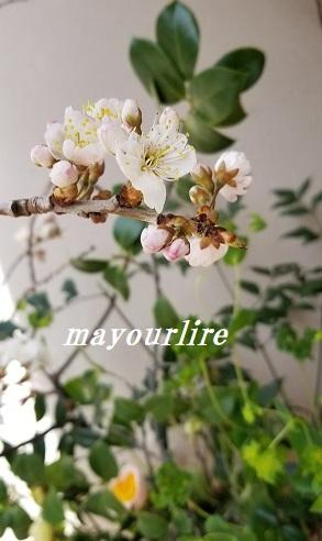 桜に元気をもらって_d0169179_18124255.jpg