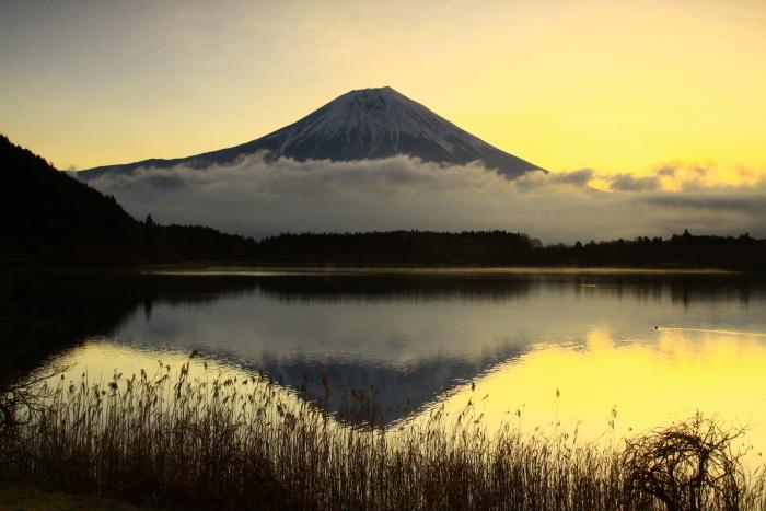 令和2年3月の富士 (3) 田貫湖の日の出の富士_e0344396_15470883.jpg