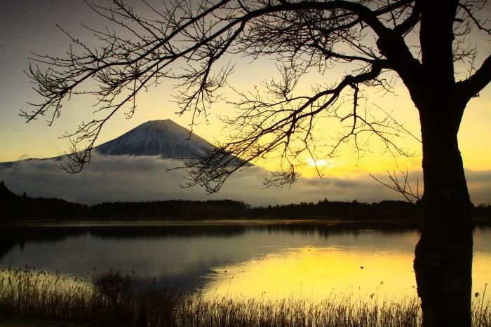 令和2年3月の富士 (3) 田貫湖の日の出の富士_e0344396_15470903.jpg