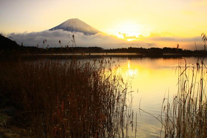 令和2年3月の富士 (3) 田貫湖の日の出の富士_e0344396_15470910.jpg