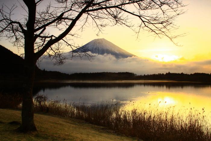 令和2年3月の富士 (3) 田貫湖の日の出の富士_e0344396_15470983.jpg
