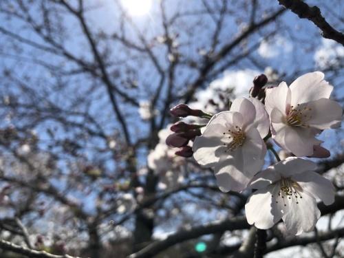 <告知>☆ 2020年3月29日 お花見ツーリング <2020-NO2>☆_d0038712_19114662.jpg