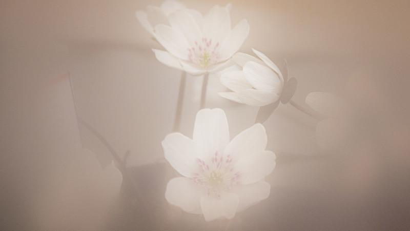春のささやき_d0370716_14091849.jpg