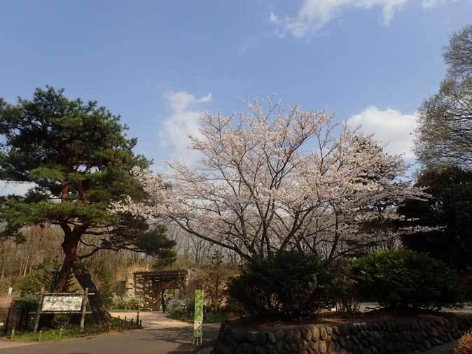 春のオオカミたち~ありがとうロト(多摩動物公園 April 2019)_b0355317_22350694.jpg