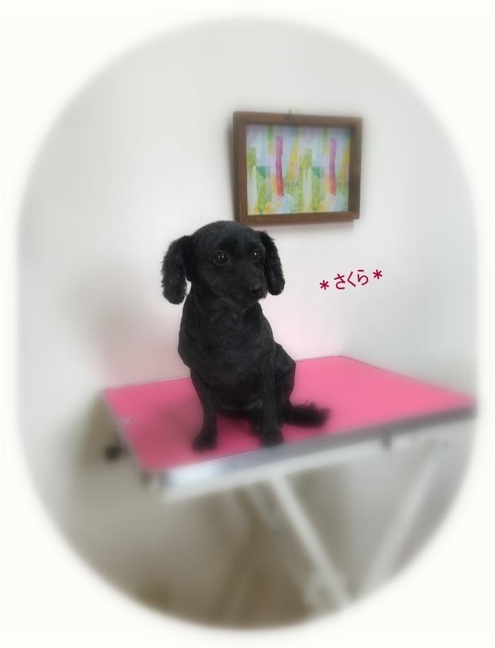 さくらちゃん_a0315823_19440097.jpg