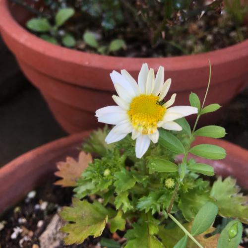 元気な春を!_e0103327_16525834.jpg