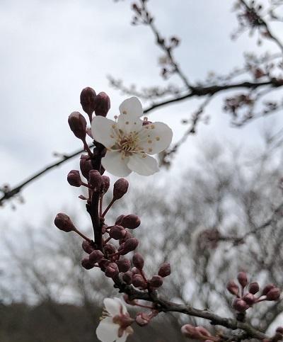 お花が次々と_b0100229_16031817.jpg