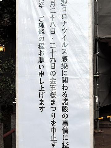 開花宣言!_c0062832_15190275.jpg