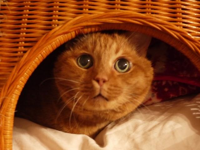 お鼻くんくん猫 しぇる編。_a0143140_20304816.jpg