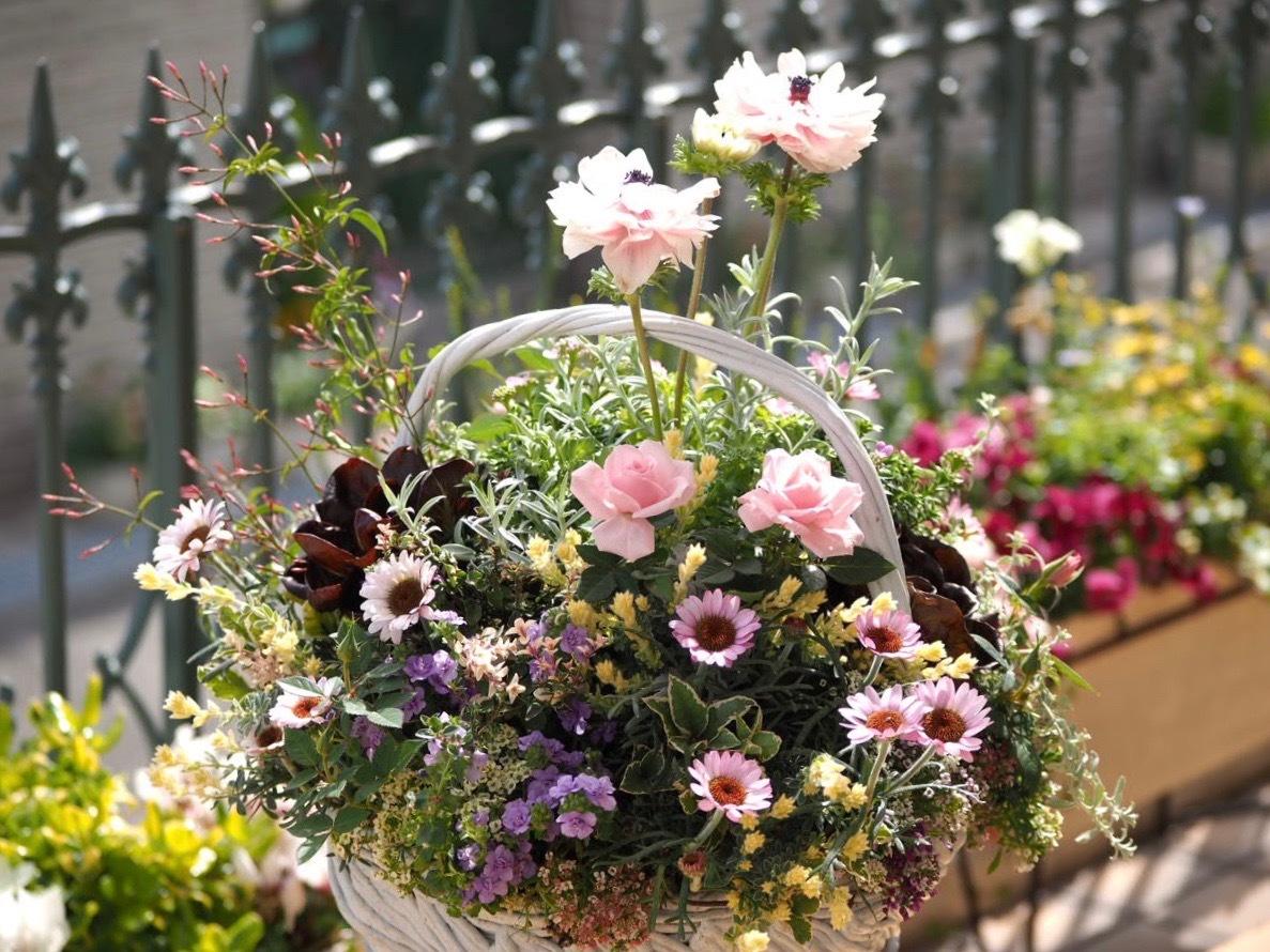 春ですね〜 お花がいっぱい咲いてますよ!_f0135940_13103245.jpg