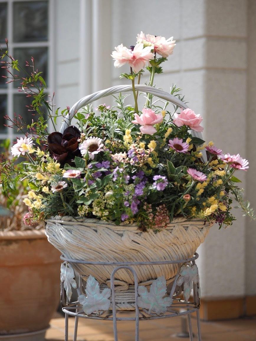 春ですね〜 お花がいっぱい咲いてますよ!_f0135940_13103758.jpg