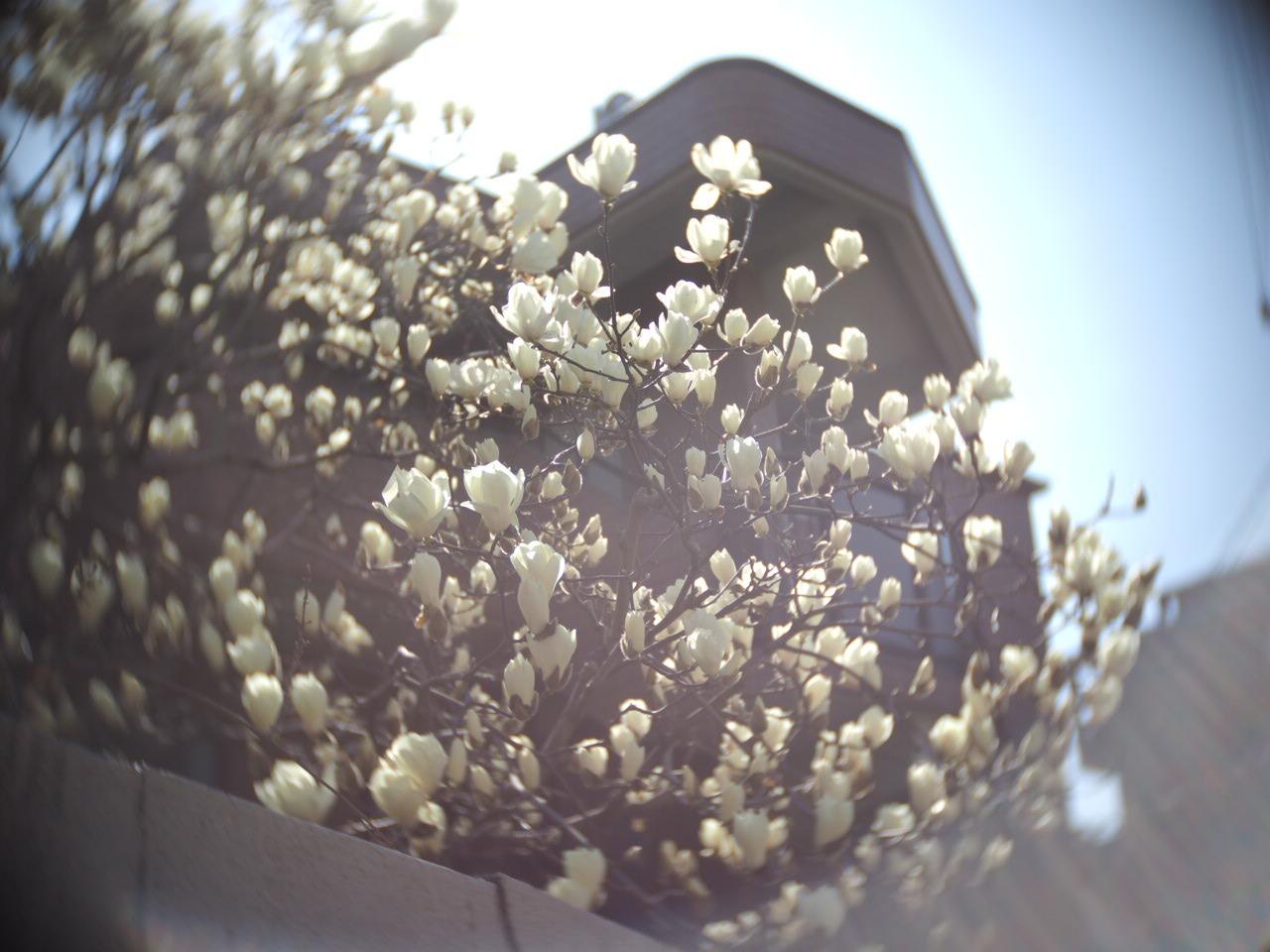 春ですね〜 お花がいっぱい咲いてますよ!_f0135940_13132703.jpg