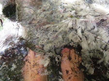 五色湯跡の美しい湯の花と苔を愛でる【奈良・川上村入之波】3/7_d0387443_09062647.jpg