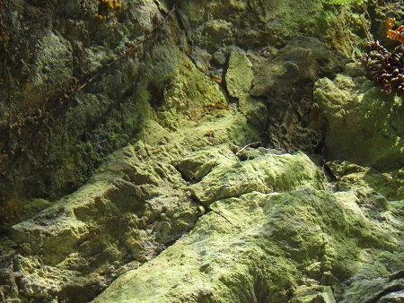 五色湯跡の美しい湯の花と苔を愛でる【奈良・川上村入之波】3/7_d0387443_09065180.jpg