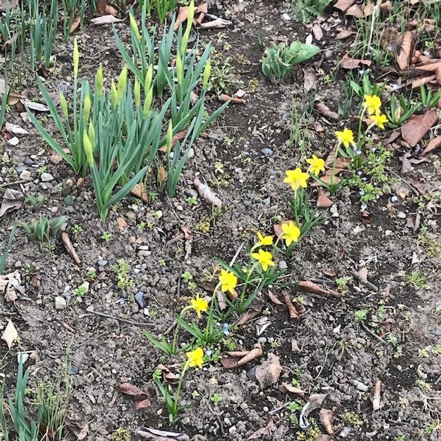 春の便りです。_e0226943_22575109.jpg
