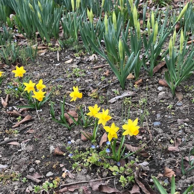 春の便りです。_e0226943_22580542.jpg
