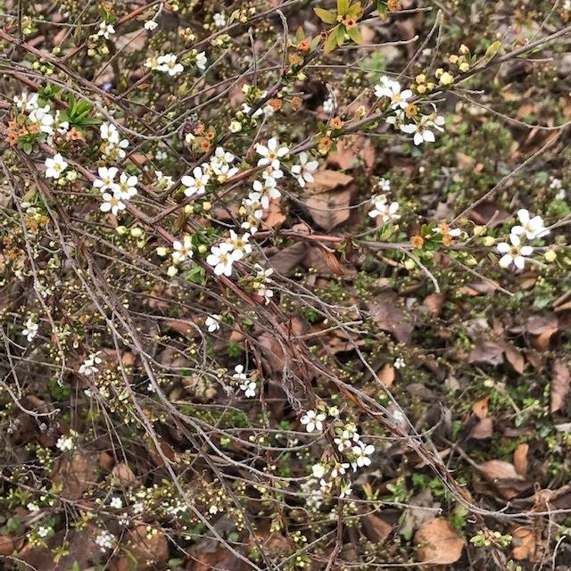春の便りです。_e0226943_22583253.jpg