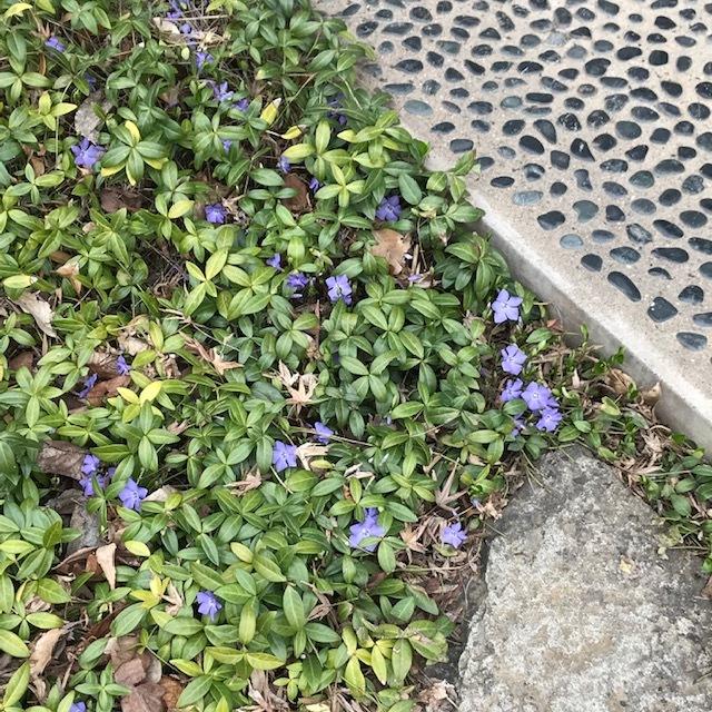 春の便りです。_e0226943_22584312.jpg